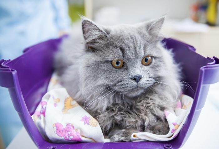 подробнее о ветеринарном страховании животных