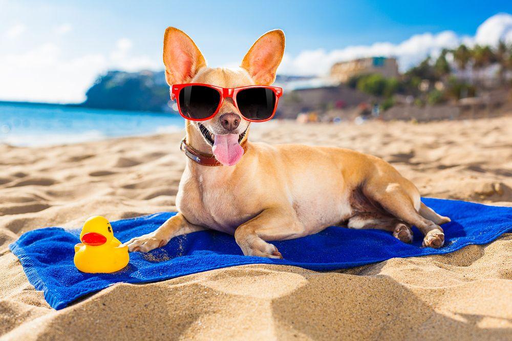 страхование собак перед поездкой