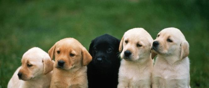 можно ли застраховать собаку от несчастных случаев
