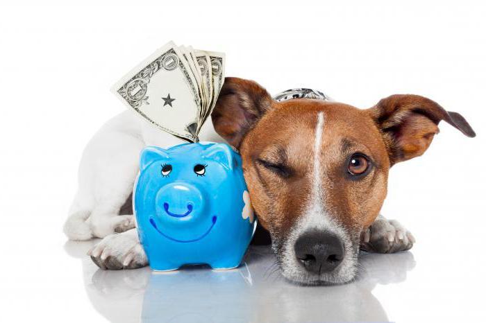 страхование домашних животных в подробностях
