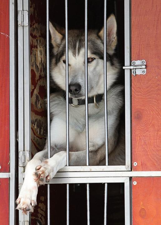 возможна ли передержка собак с дрессировкой