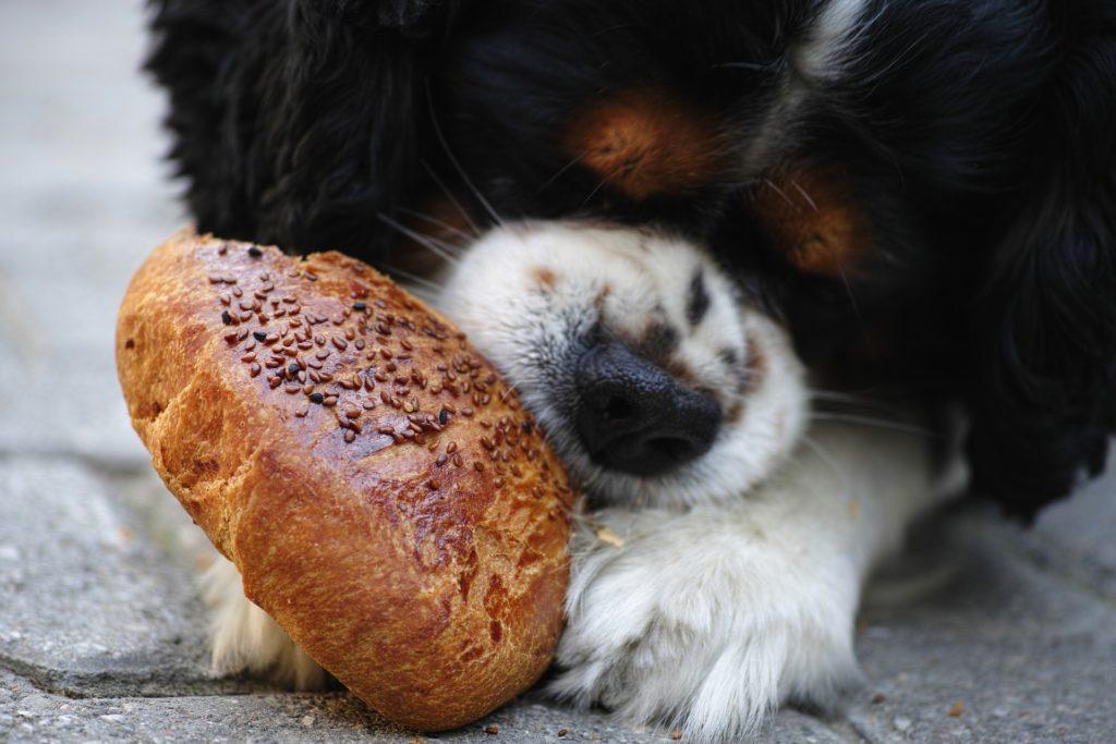 какие продукты нельзя собакам