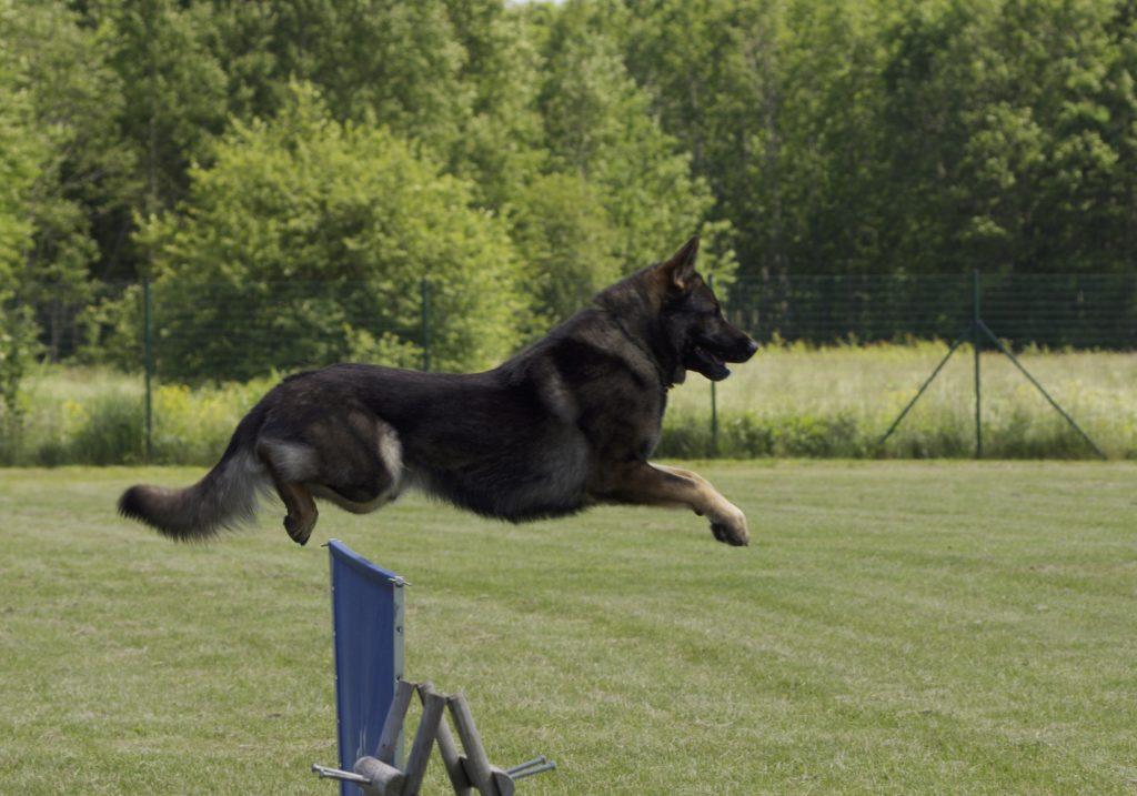 как выбрать курсы дрессировки собак