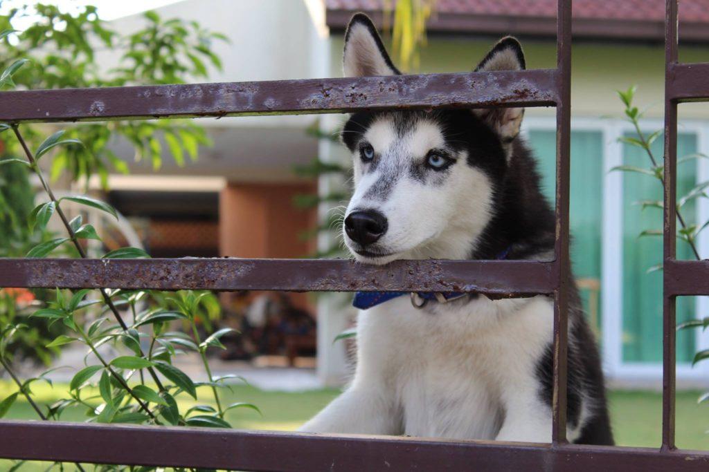 где оставить собаку на время отпуска
