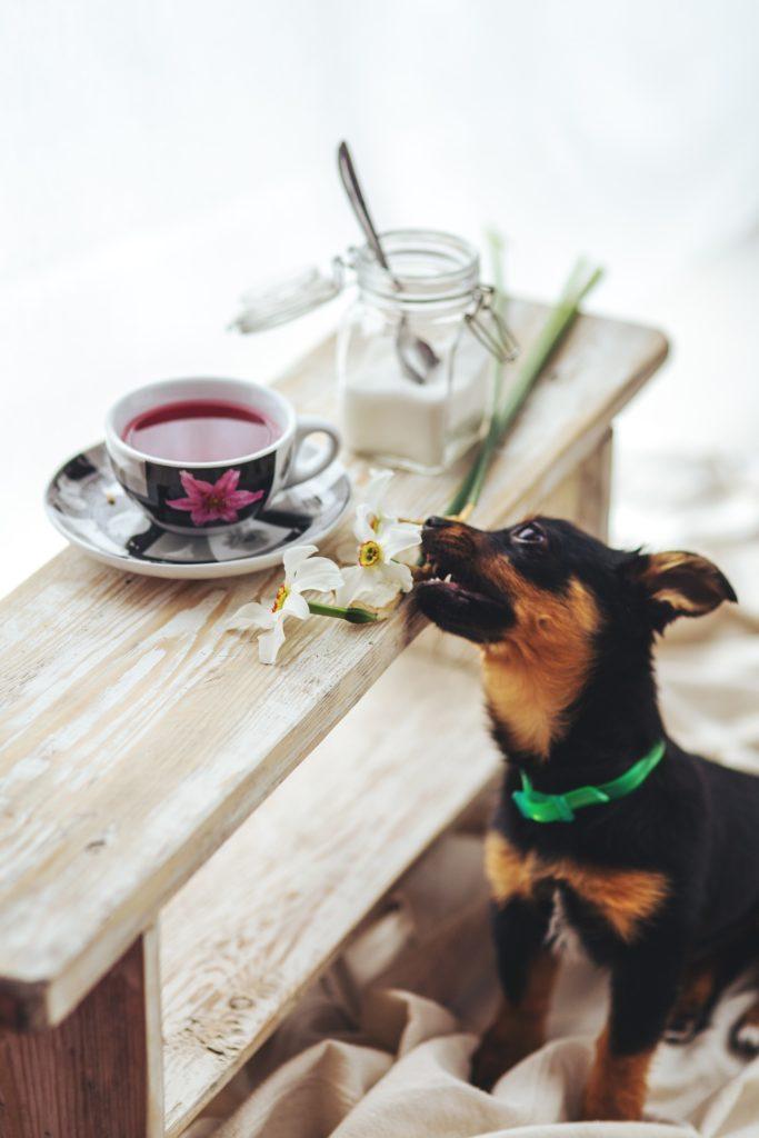 можно ли собакам сахар
