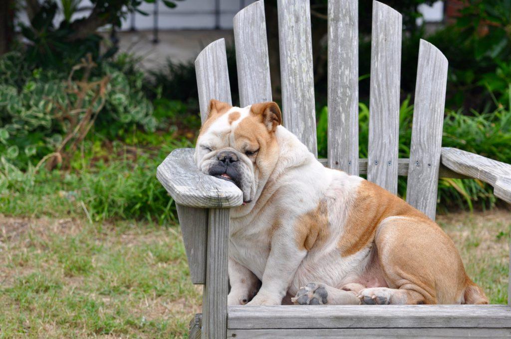 корм для кастрированных собак при ожирении